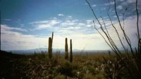 Arizona_Landscape4_SkywithCacti_Trees