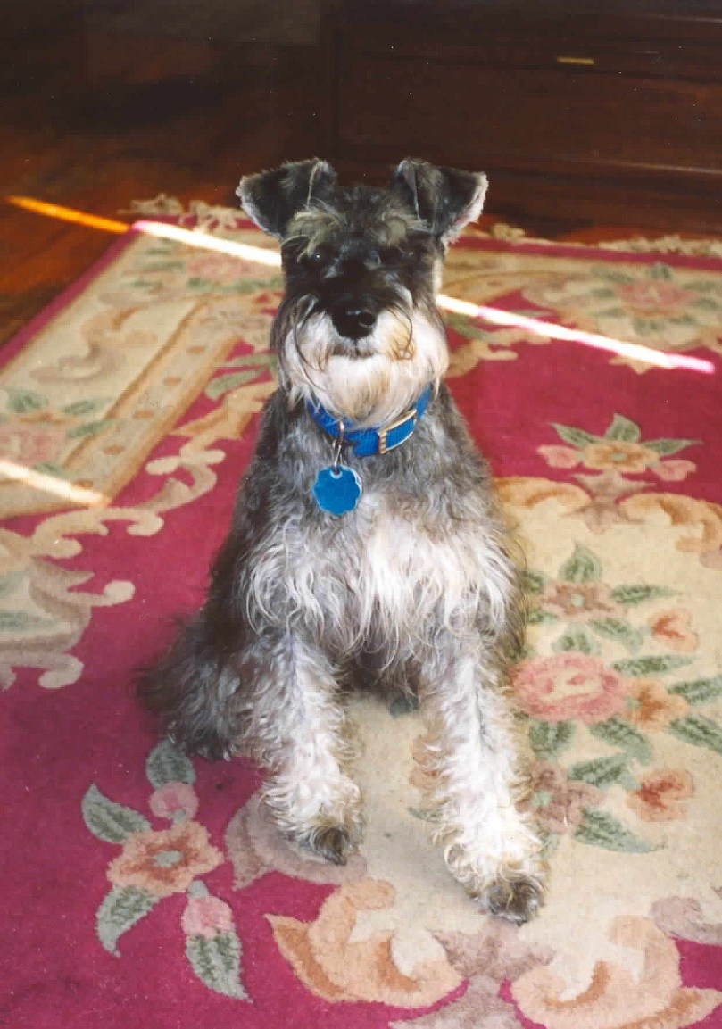 I have a void in my heart, Nemo, my miniature schnauzer died recently.