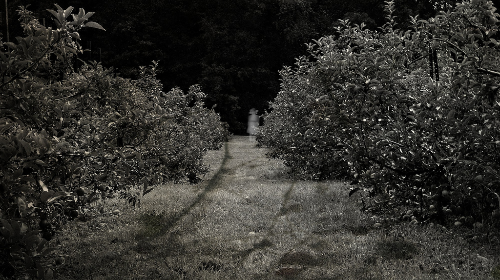 more than a game, spooky orchard, lynettemburrows.com