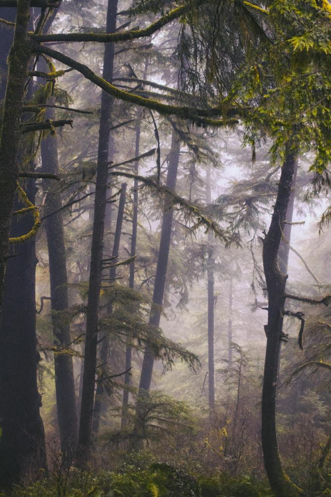 image of trees in a fog when the fog represents the lost and found memories of trauma
