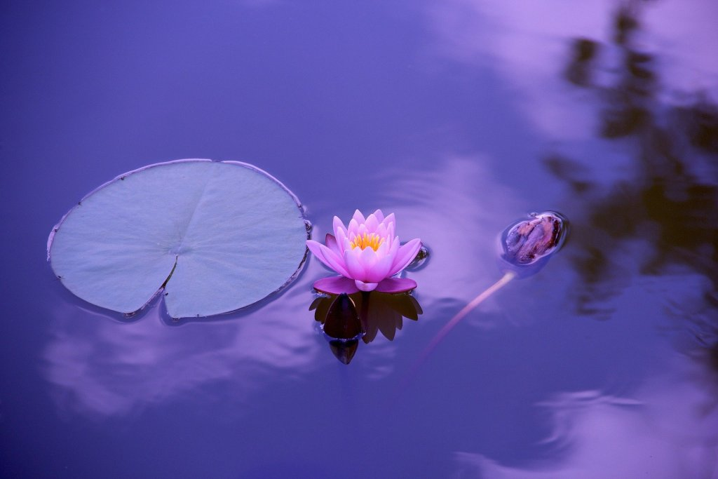 a pink lotus flower in water reflecting the blue sky and white clouds above and these inspirational quotes for tough times to remind you how tough you are