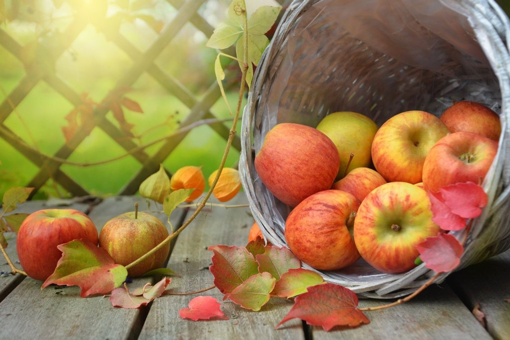 Photograph of a basket spilling out ripe apples that are red and yellow. Just as orchards must be tended, so should you tend your creativity when the season changes.