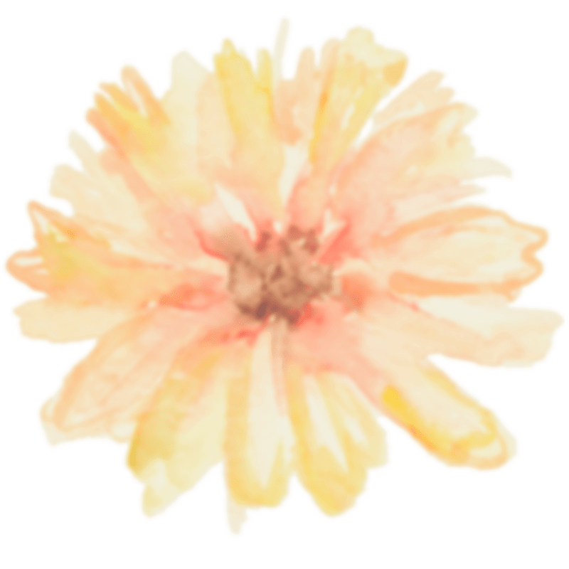 Daisy - contact form link