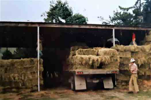 Small hay bales stacked in a hay barn