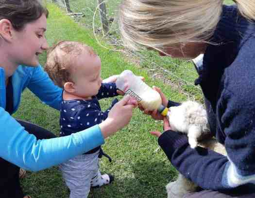 1 year old Harvey is bottle feeding a lamb with his mother and auntie at lambing time.