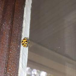 Day 10 #irony#mycuriouseyes It struck me as ironic that my window was keeping this little guy *in*
