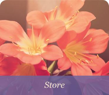 lynn-home5-store