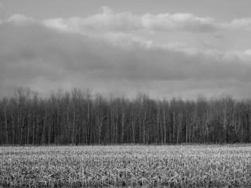 farm fields woods and sky