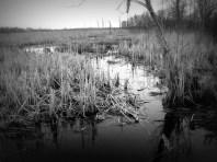 Cooper's Marsh 4