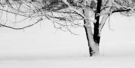 DSCN0921 tree in snow