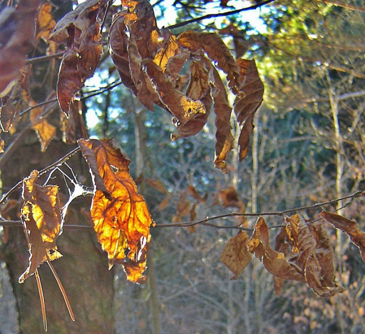 dried leaves on branch in autumn