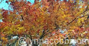 wpid-2014-10-24-12.14.12.jpg.jpeg