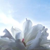 email, sky flower © Lynne Medsker