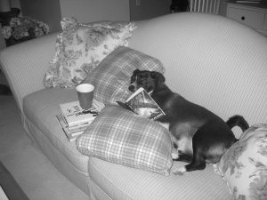 A dog lies on a couch with a stack of books, as if reading.