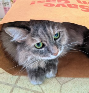 Fluffy gray cat with enormous eyes peering out of a paper bag