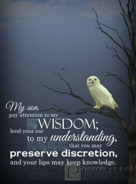 4cd6ecb0d7316037a5fce87da6b2d10a--beautiful-owl-bible-proverbs