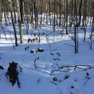 Deer path!