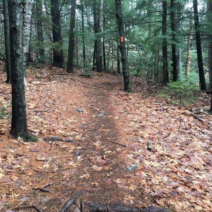 Near the bottom of the Gunstock Mountain trail.