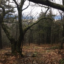 Looking back down the Gunstock trail.