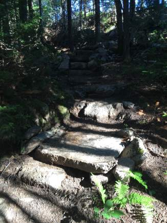 BRATTS has been doing a lot of work on the upper section of the Brook trail - like these steps.