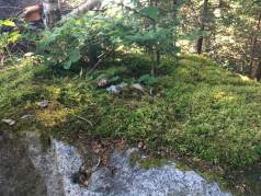 Zoomed out shot of the fairy garden in context.