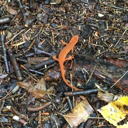 This was the first newt...
