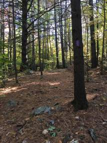 This is a very nice and pretty easy trail through the woods. The blazes can be hard to see in some areas due to the color, so keep an eye out.