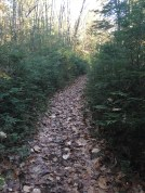 Center section of the Lower Loop, a very pretty area with trail bordered by young evergreens.