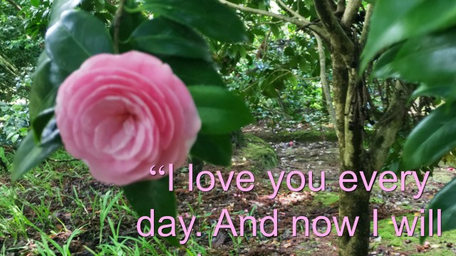 Quote -I will love you everyday by Mitch Albom