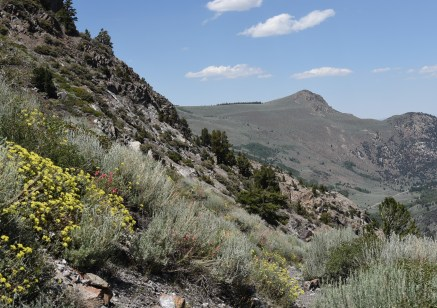 Trail down Rush Creek