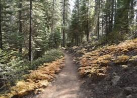 wuksachi-trail-with-ferns