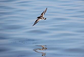 birds-at-bird-island