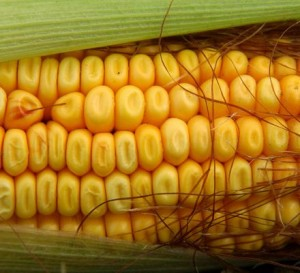 (Image from from-hamptonhostess.blogspot.com)