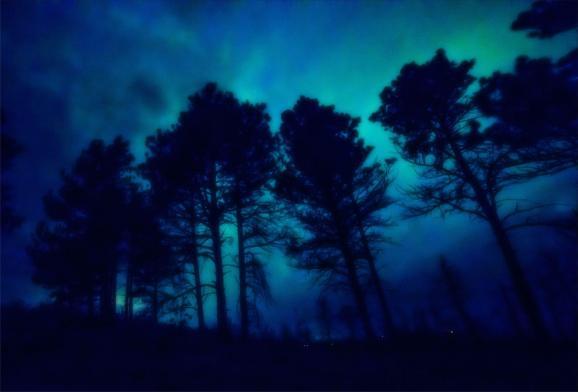 winter solstice tom swift bird lynsey g