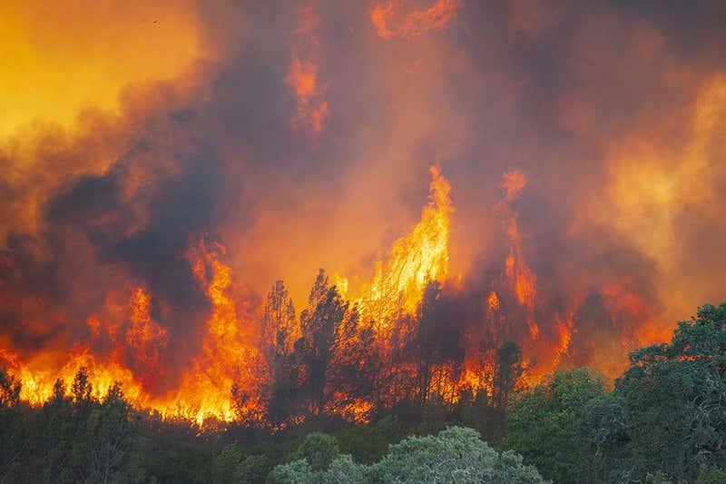 wildfire sucks