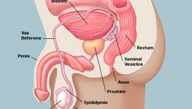 Enlarged Prostate and Prostate Enlargement