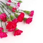 母の日のプレゼントに人気グルメやお花とスイーツのセット