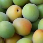 梅ジュースの栄養素 瓶の消毒方法と簡単おいしい作り方!