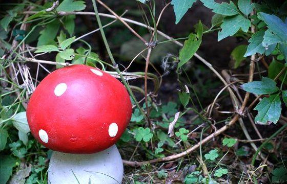 Drôle de champignon à Gerland