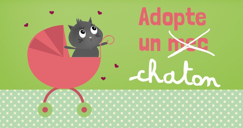 adopte un chat-03