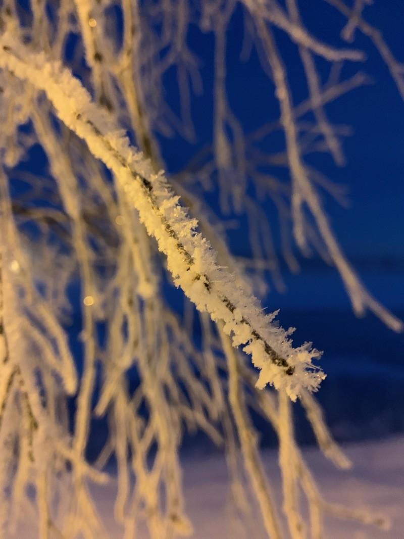 Neige glacée sur un arbre