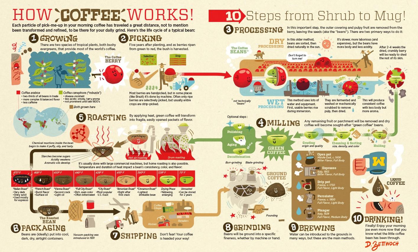 Du haricot à l'infusion : la chaîne d'approvisionnement du café