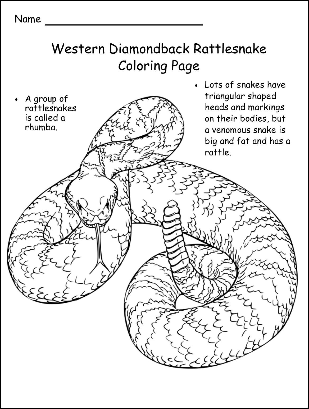Rattledsnake Desert Animal Worksheets For First Grade Rattledsnake Best Free Printable Worksheets