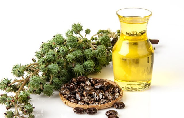 Essential oils for healthy hair lysa africa castor oil