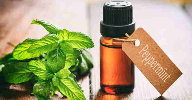 Essential oils for healthy hair lysa africa peppermint oil