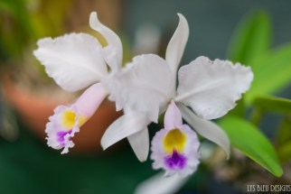 orchids w (23 of 101)