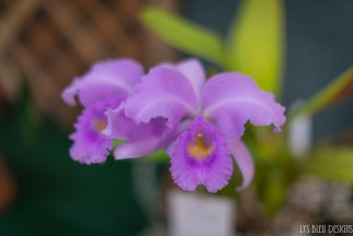orchids w (24 of 101)