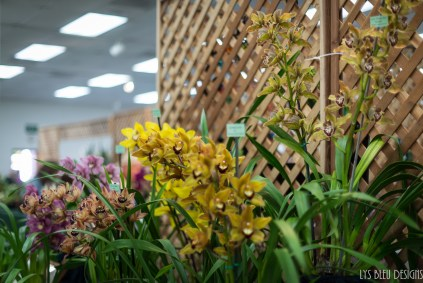 orchids w (95 of 101)