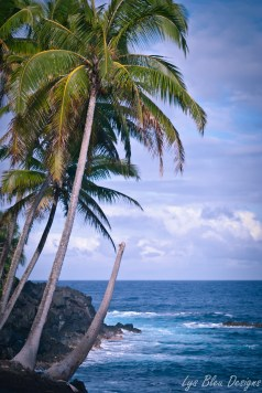 palm trees hawaii ocean