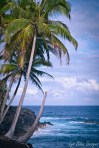 palm trees hawaii ocean